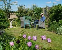 a quiet time in the garden (quietpurplehaze07) Tags: ray reading garden tulips purple