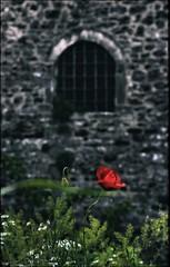 * (PattyK.) Tags: ioannina giannena giannina epirus ipiros balkans hellas ellada europe europeanunion greece grecia griechenland mycity whereilive snapseed nikond3100 poppies red spring may 2019 ιωάννινα γιάννενα ήπειροσ ελλάδα ελλάσ βαλκάνια ηπόλημου όμορφηπόλη παπαρούνεσ κόκκινο άνοιξη μάιοσ κάστροιωαννίνων κάστρο παράθυρο κάγκελα παλιό castle ioanninacastle window medieval medievalcastle itskale ιτσκαλέ