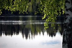 a sunny spring evening (EllaH52) Tags: water river spring sun sunny sunlight evening afternoon birch tree branches green leaves forest wood