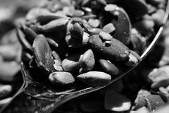A spoonful of Macro Monday subject matter (Puckpics) Tags: macromonday monday13thmay2019 13may2019 aspoonfulof spoonful spoonseeds nuts breakfast food macro monochrome