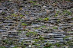 ¿Tejado o suelo? (SantiMB.Photos) Tags: 2blog 2tumblr 2ig santjoandelesfonts garrotxa girona invierno winter basalto basalt boscarró rocas rocks geo:lat=4221423596 geo:lon=250991560 geotagged santjoanlesfonts cataluna españa