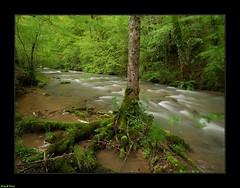 La Furieuse en amont du Martinet - Jura (francky25) Tags: la furieuse en amont du martinet jura rivière franchecomté printemps