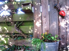 fancy fence (hussi48) Tags: zaun fence holz natur ameise rot weinranke fancyfence smileonsaturday