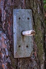 Pinoccio, South Tyrol (::ErWin) Tags: naturno trentinoaltoadige italien südtirol vinschgau meran meranerhöhenweg face tree