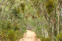 Wirrabara Forest Track, South Australia (Red Nomad OZ) Tags: wirrabara southaustralia australia wirrabaraforest forest nature natural outdoor southernflindersranges midnorth flindersranges country rural countryside