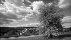 14.05.2019 - Altensteig - (HOR-BS 696) Tags: altensteig badenwürttemberg blackforest berndsontheimer schwarzwald schwarzweiss blackwhite noiretblanc