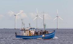Tourboat in Øresund (Thomas Rousing Photography) Tags: copenhague denmark nordic øresund capital köpenhamn kopenhagen fishing danish copenaghen tour iskandinavya dänemark kopenhaga hovedstad windpower europa dinamarca city thomasrousing fiskebåd båd kaupmannahöfn boat danimarca wwwthomasrousingdk norden danmark kööpenhamina nordhavn scandinavia copenhagen danka european københavn vindmøller europe euro skandinavien