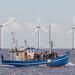 Tourboat in Øresund