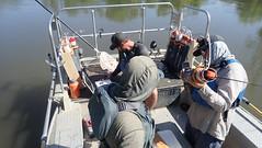 Preparing Predation Event Recorders