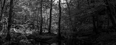 Söderåsen panorama (Mattias Lindgren) Tags: söderskogens nationalpark nikon d600 spring skåne stitch back black sweden stitched 50mm f18 panorama scania bw söderskogen 50mmf18 nikond600 backtoblack söderskogensnationalpark