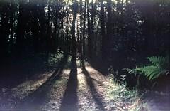 Skugga av träden