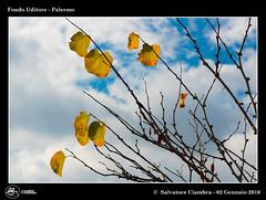 1123_D8A_0309_bis_D810_Parco_Uditore (Vater_fotografo) Tags: geo:lat=3812900351 geo:lon=1332784005 geotagged panorama foglie foglia vaterfotografo natura nikonclubit nikon nuvole nwn nuvola ngc nube ncg nubi ciambra cielo ciambrasalvatore controluce sicilia salvatoreciambra palermo parcouditore