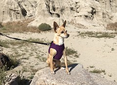 Red Rock Canyon State Park (valeehill) Tags: roadtreking overthehillsisters oths california redrockcanyonstatepark kerncounty peaches chihuahuarescue dog