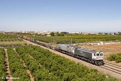 Doble 319 en Valencia (ɢ. ʙᴇʀᴇɴɢᴜᴇʀ [ ō-]) Tags: 319 dt 319402 319212 renfe mercancías tr tracciónrail locomotora railway railroad valencia madrid benifaió doble 1900 caldero retales superserie paisaje campo ferrocarril 3192 3194 pantone rosco teco freight