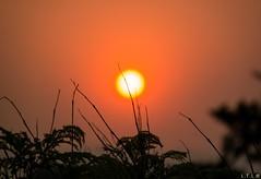 Fat old sun (LTL78) Tags: samsungnx30 sun sol ocaso sunset