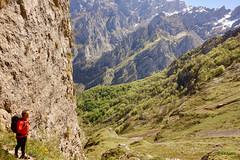 Contemplando el bosque La Tejera (KRAMEN) Tags: pn picosdeeuropa león spain nature mountains green hayedo macizo central nieve neige roca stone caín valdeón