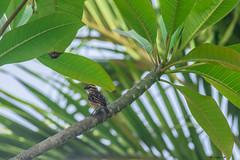 BIRD   ---   EXPLORE (cune1) Tags: uccelli birds animali animals natura nature alberi trees mare sea