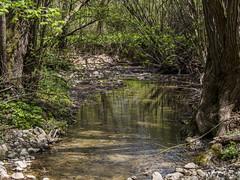 Bakonynána - Gaja-patak (VeresIbi) Tags: hungary ungarn zuiko autumn magyarország mzuiko patak víz olympusepl5 olympus olympusm40150mmf4056r okt bakony bakonynána túra természet nature natural növény túraút túraútvonal kéktúra tour