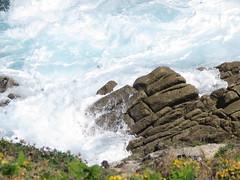 IMG_8753 (jesust793) Tags: mar sea olas waves rocas rocks flores flowers costa