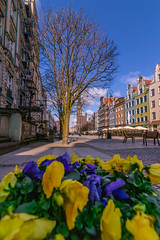 Spring in Gdansk (Vagelis Pikoulas) Tags: gdansk poland spring europe travel holidays flowers flower nature landscape canon city cityscape architecture april 2019 tokina 1628mm 6d