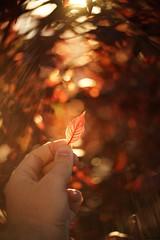 Be grateful for the little things (JoeCow) Tags: seeinanewway lensbaby twist60 sooc lensflare utah bokeh leaf