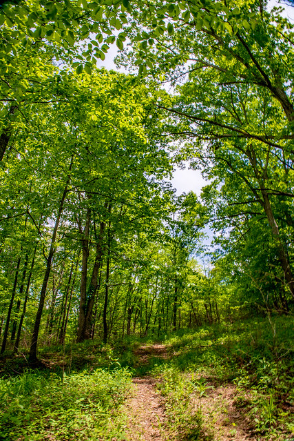 Hoosier National Forest - Mogan Ridge - May 14, 2019