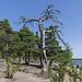 Äijänniemi beach near Karhula 241