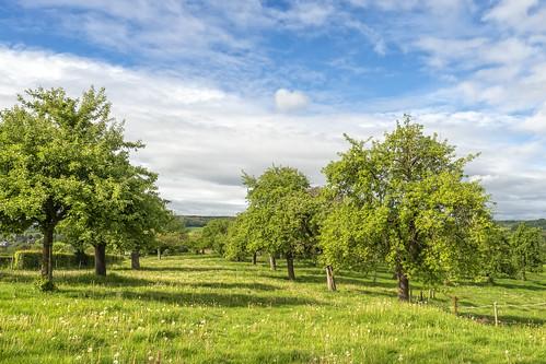 Appelboomgaard - Zuid-Limburg - NL