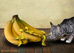 First meeting (_Ann m_) Tags: banana alien loki cat funny mmm mmmchallenge photoshop photomanipulation photoart