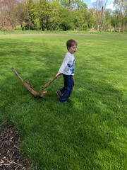 """Paul Drags a Big Stick • <a style=""""font-size:0.8em;"""" href=""""http://www.flickr.com/photos/109120354@N07/32912817317/"""" target=""""_blank"""">View on Flickr</a>"""