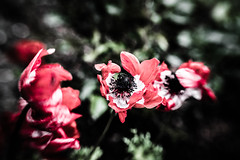 End of Life (NathalieSt) Tags: europe exmes france normandie bassenormandie campagne countryside hybrid lensbaby lensbabysol45 nature nikon nikonz6 nikonpassion nikonphotography sol45 z6