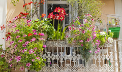 Small but colourfull Balcony Corfu Town (CapMarcel) Tags: small but colourfull balcony corfu town