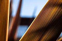 The edge (.Stephen..Brennan.) Tags: abstract da35macro foliage patterns pentax pentaxk3 perth westernaustralia australia