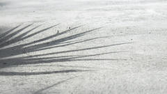 p (summeradamowicz) Tags: plant shadow ground cement sunlight canon