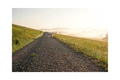 Morgens früh um zehn vor sechs. (balu51) Tags: morgen morgenspaziergang landschaft hügel wiesen nebel dunstig hund kuvasz ungarischerhirtenhund gegenlicht frühling mai 2019 copyrightbybalu51