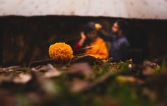 (R4H4D) Tags: couple flower saree panjabi