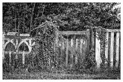 Back to no future XXXII (CrËOS Photographie) Tags: hernicourt pasdecalais france barrière fence abandonné abandoned nature vegetation