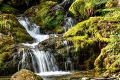 Walk With Sarah & Jazz 4 (Nikki M-F) Tags: hills wales uk waterfall moss