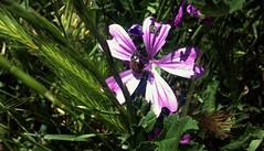 Flowers (Anna Gelashvili) Tags: flower цветочки flowers soil почва ყვავილი ყვავილები macro растение ბალახი garden beetle жук insect насекомые цветок ხოჭო цветы