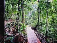 Forest Reserve Lake Jalan Merbah 10/1, Kota Damansara, 47810 Petaling Jaya, Selangor https://maps.app.goo.gl/AJnjC  https://foursquare.com/soonlung81  https://maps.app.goo.gl/CPWsi  https://www.flickr.com/photos/32492415@N08/  https://www.instagram.com/s/ (soonlung81) Tags: naturel reizen semester 여행 viaggio naturale malaysia vakantie holiday asian 馬來西亞 การเดินทาง طبيعة природа natuurlijk 휴일 trip natuur fiesta vacances سفر 自然 ธรรมชาติ 亞洲 путешествие natural nature alam traveling 度假 旅行 大自然 voyage عطلة праздник vacanza natürlich resa วันหยุด asia ホリデー 자연 viaje reise urlaub travel