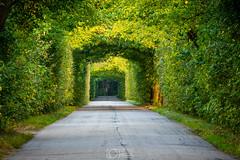 A natural tunnel (Misztu) Tags: ostróda ostroda miłomłyn milomlyn mazury masuria polska poland tunel tunnel drzewa trees droga road krajobraz landscape natura nature outdoor pentax lato summer