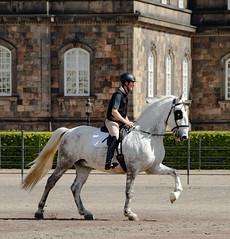 Royal Horse