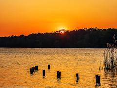 Sunset on the long lake in Köpenick (Steppenwolf33) Tags: sunset lake köpenick sky steppenwolf33 reed forest