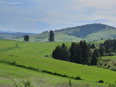 Toward Tomer Butte from Paradise Ridge Road (bencbright) Tags: palouse moscow idaho landscape canonsx60 canon superzoom telephoto tree grass green spring latah