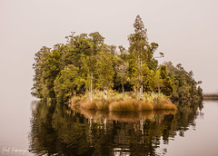 out of the fog West coast New Zealand (furbs01 Thanks for 5,500,000 + views 2 July 2018) Tags: trees fog water reflections grass bush new zealand