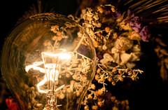 Warm bulb light still life (bolex.ua) Tags: stilllife exceptionalstilllife stilllifemood jjstilllife astilllifestyle transfervisions stilllifegallery stilllifephotograhy stillsphotography nikon flowers dry bulb warm nikonphoto light yellow shadows