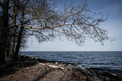Lakewalk, Duluth 5/15/19 #lakesuperior #tree #shore (Sharon Mollerus) Tags: duluth mn cfptig19