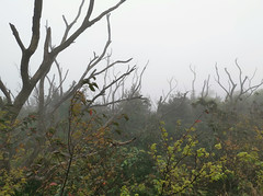 Misty Moiuntaintop (cowyeow) Tags: hongkong forest mist china chinese asia asian atmosphere misty trees nature composition taimoshan
