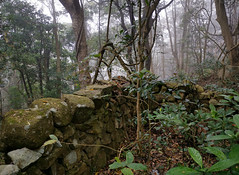 Forgotten Wall (cowyeow) Tags: hongkong forest mist china chinese asia asian atmosphere misty trees nature composition taimoshan wall forgotten abandoned overgrown rocks rockwall
