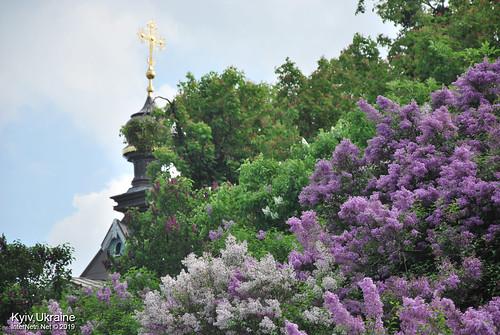 Київ, Ботанічний сад імені Гришка  Цвіте бузок InterNetri Ukraine 27